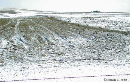 Winter- or spring-applied manure