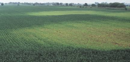 Waterlogged soils/yellow N-deficient corn areas.