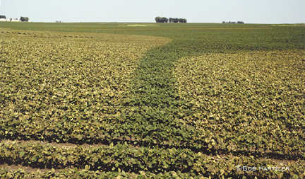 Soybean postemergence herbicide injury
