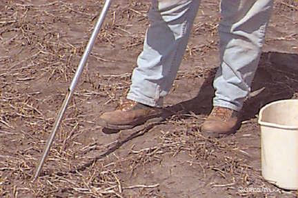 Soil sampling for soybean cyst nematode