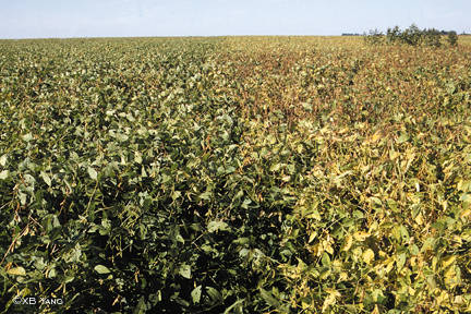 White mold suppression by Cobra