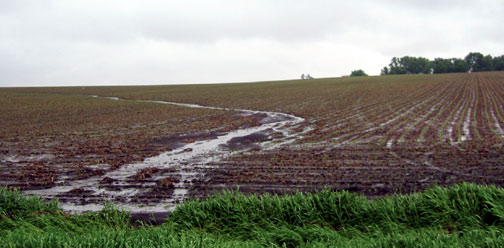Convential tillage after rain