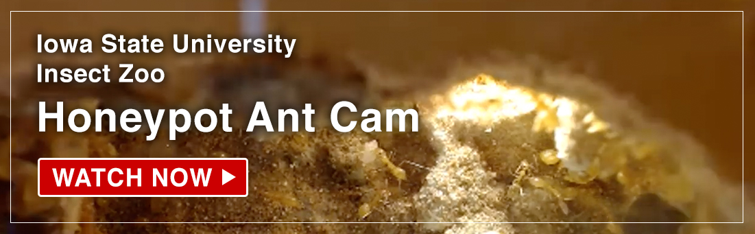 Ant cam still image with Watch Now button