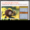 Conserving Beneficial Insects with Native Plants